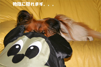 yuzu080602-2.jpg