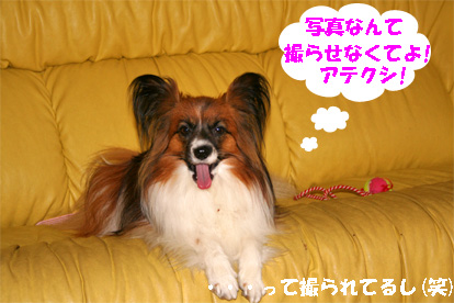 yuzu080602-3.jpg