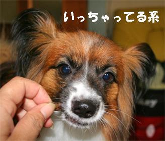 yuzu080603-1.jpg