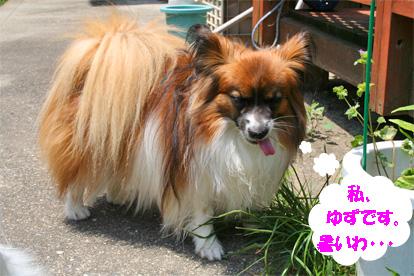 yuzu080617-1.jpg