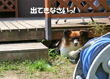 yuzu080617-3.jpg