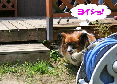 yuzu080617-4.jpg