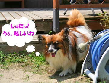 yuzu080617-5.jpg