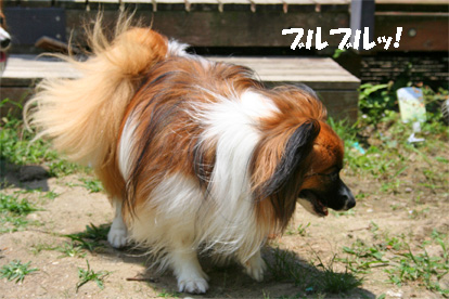 yuzu080617-6.jpg