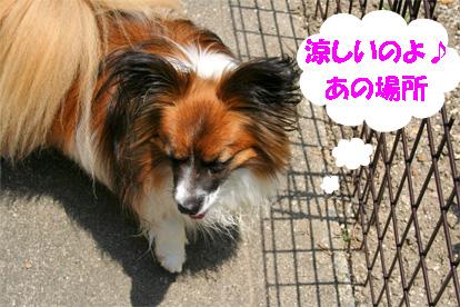 yuzu080617-7.jpg