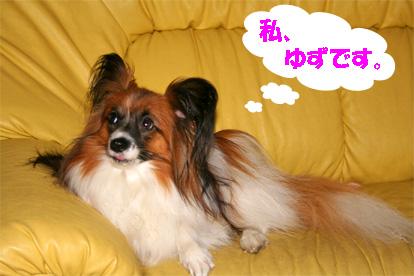 yuzu080619-1.jpg