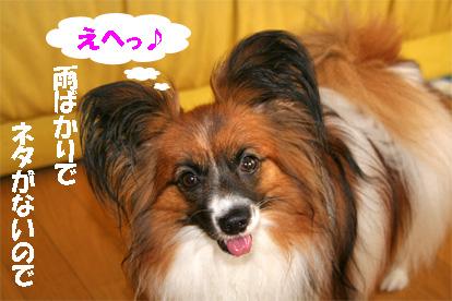 yuzu080623-2.jpg