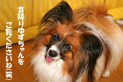 yuzu080623-3.jpg
