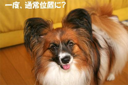 yuzu080623-5.jpg