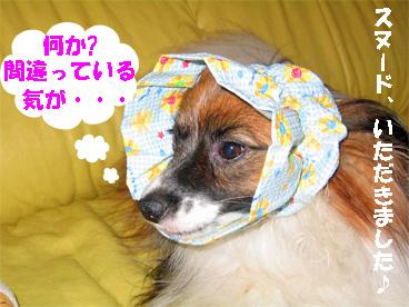 yuzu080909-2.jpg