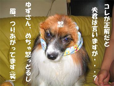 yuzu080909-3.jpg