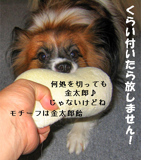yuzu080912-1.jpg