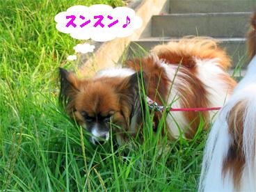 yuzu080917-1.jpg