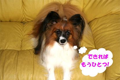 yuzu080926-2.jpg