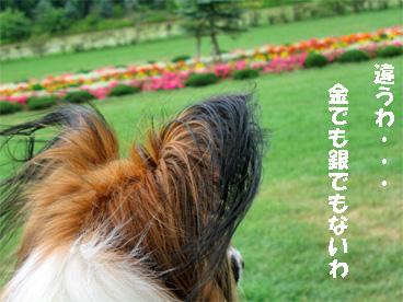 yuzu080927-2.jpg