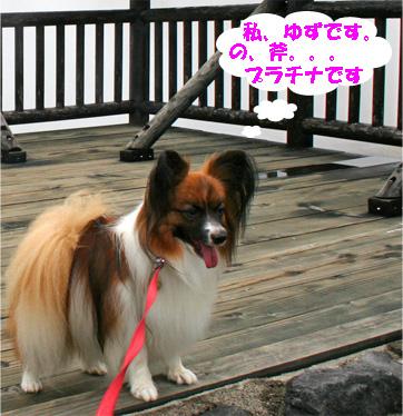 yuzu080927-3.jpg