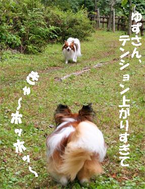 yuzu080928-3.jpg