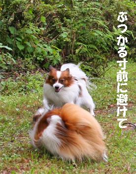 yuzu080928-5.jpg