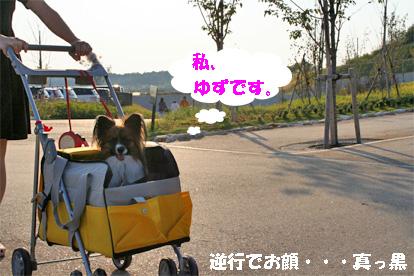 yuzu081018-1.jpg