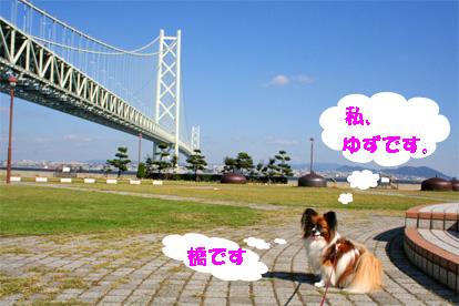 yuzu081101-1.jpg