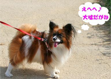 yuzu081102-1.jpg