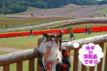 yuzu081102-2.jpg