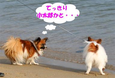 yuzu081102-7.jpg