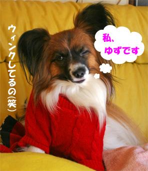 yuzu090128.jpg