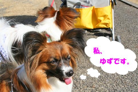 yuzu090215-1.jpg