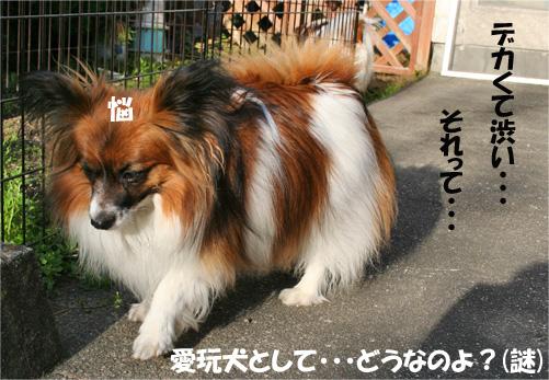 yuzu090305-1.jpg