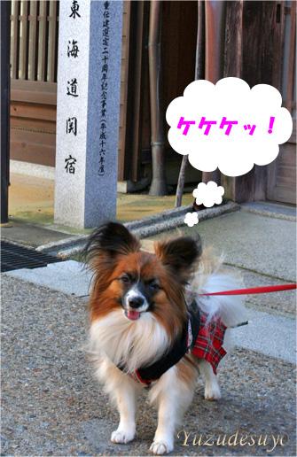 yuzu090313-2.jpg