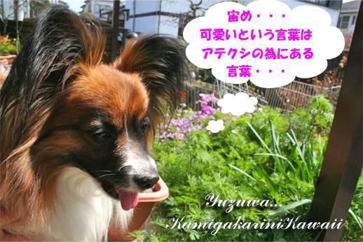 yuzu090324-1.jpg