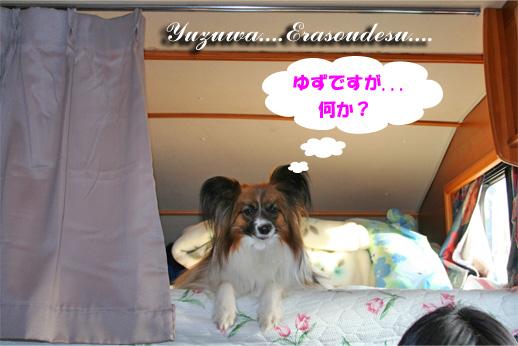 yuzu090325-1.jpg