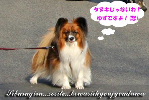 yuzu090326-3.jpg