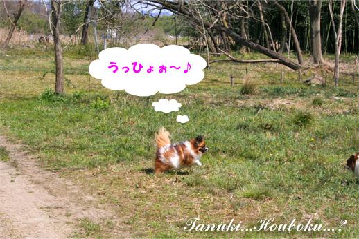 yuzu090330-1.jpg
