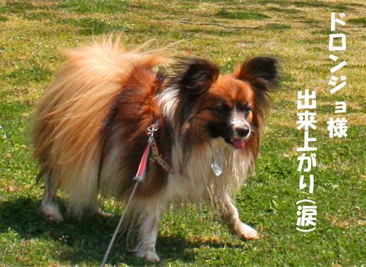 yuzu090331-1.jpg