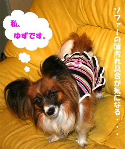 yuzu090402-1.jpg