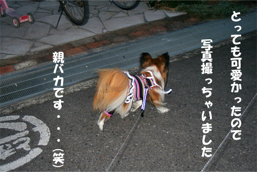 yuzu090402-4.jpg