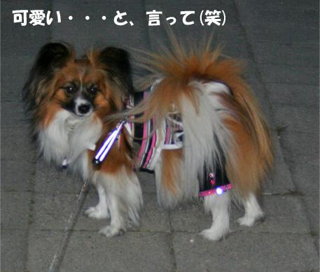 yuzu090402-5.jpg