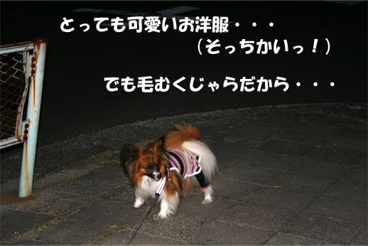 yuzu090402-6.jpg