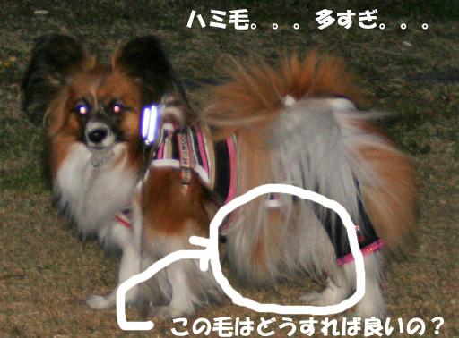yuzu090402-7.jpg