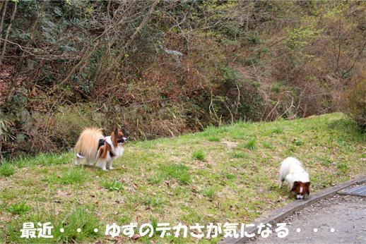 yuzu090407-1.jpg