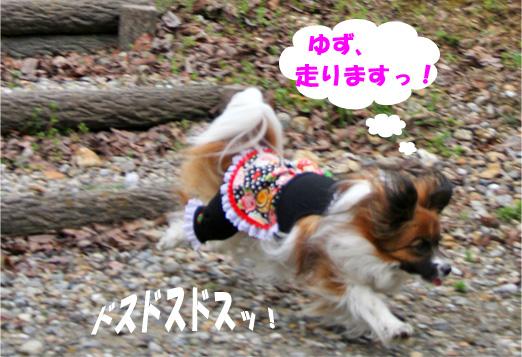 yuzu090407-3jpg.jpg