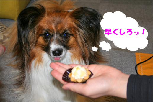 yuzu090407-5.jpg