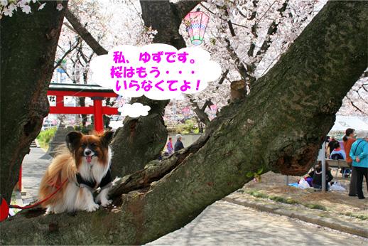 yuzu090409-1jpg.jpg