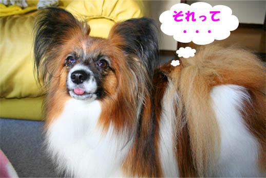 yuzu090415-2.jpg