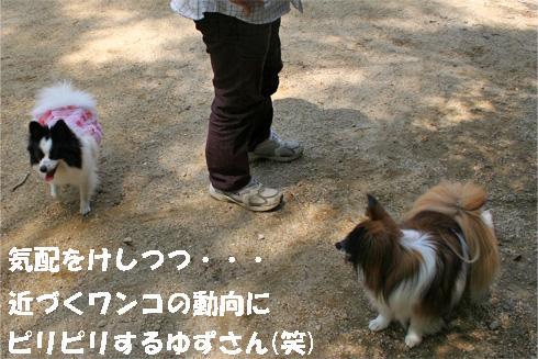 yuzu090422-2.jpg