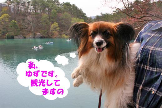 yuzu090503-2.jpg