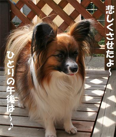 yuzu090522-1.jpg