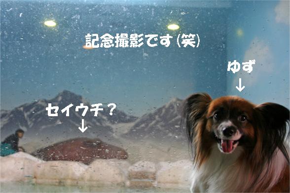 yuzu090526-1.jpg